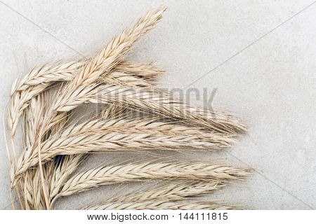 Ripe golden wheat on grey rustic background, copy space, harvest concept
