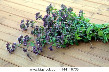 Mentha arvensis. Bouquet of branches of field mint on brown wood background closeup view