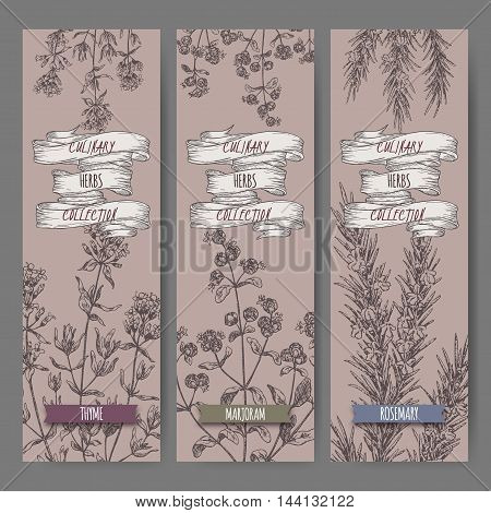 Set of three vector banners with thyme, marjoram, rosemary sketch. Culinary herbs collection. Great for cooking, medical, gardening design.