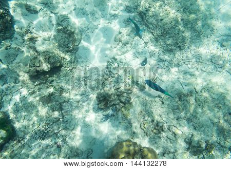 small sea fish find food underwater seaenvirontment