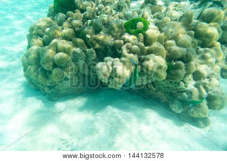 life of green fish and hard coral underwater sea and sand