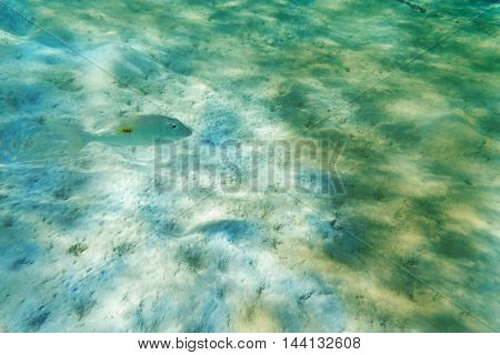 abstract white power fish clean the sea from dirty to clear blue