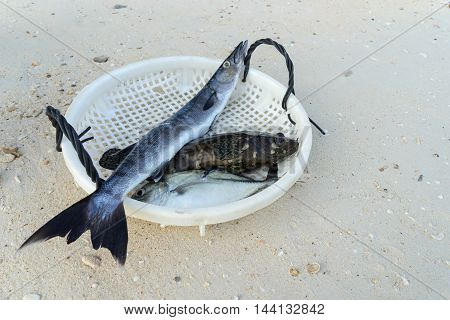 grouper;barracuda; fish; animal; dinner; fresh; background; food; white; healthy; red; sea; ocean; organic; silver; eye; seafood; fishing; vertebrate; isolated; raw; market; lanka; sri; beruwela; health; outdoor; life; head; freshness; eating;