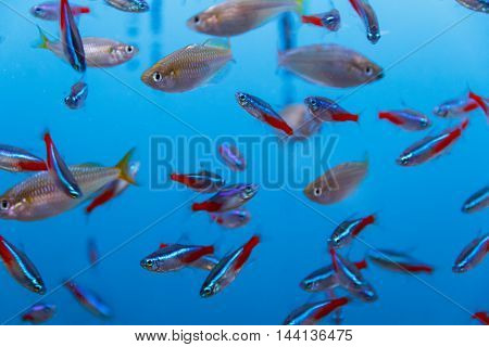 Photo of large amount of small yellow and grey fishes