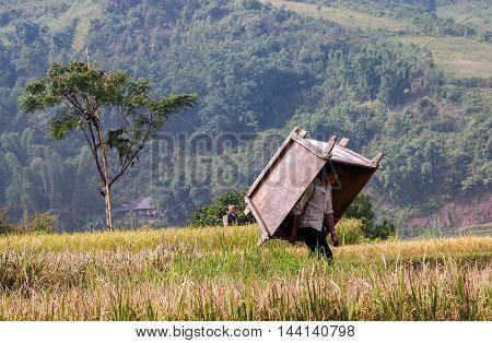 YEN BAI, Vietnam, October 3, 2016 man, harvesting rice on terraced fields high mountains, Yen Bai, Vietnam