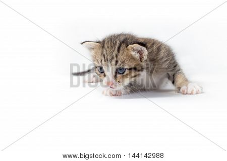Gray sleepy kitten sitting isolated on white background