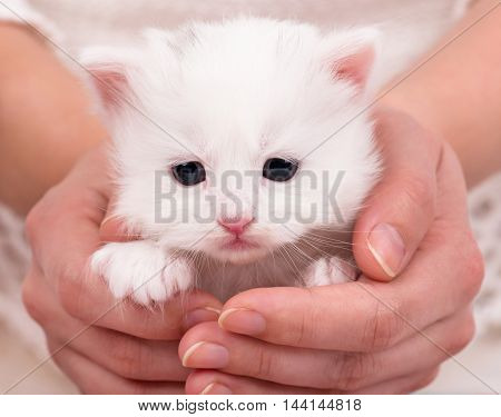 Cute little kitten on a woman's hands over white background