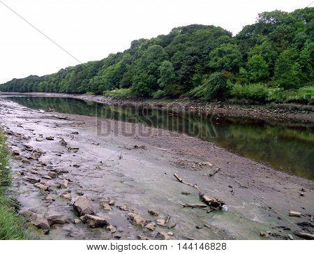 Driftwood on Muddy Banks of the River Wear Near Sunderland