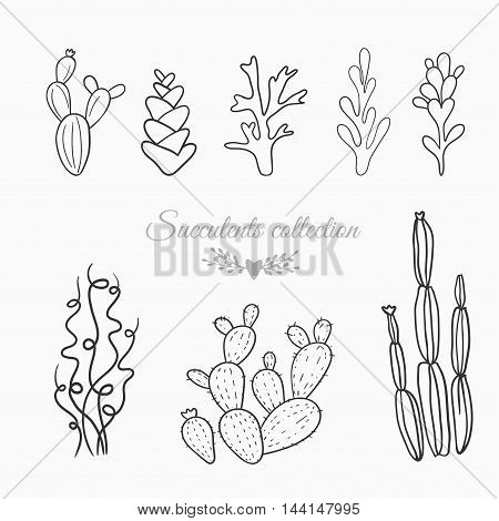 set of cactuses and succulents, vector illustration