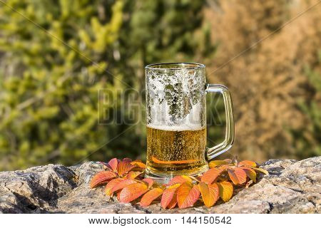 Mug with frothy beer is standing on rock among autumn leaves