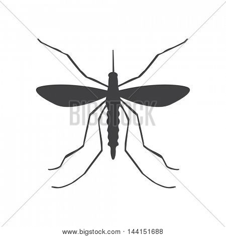 Mosquito illustration isolated on a white background