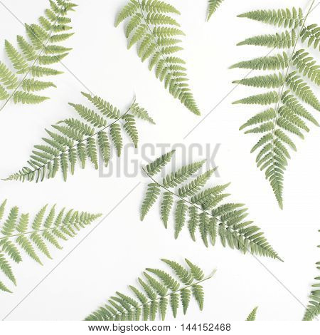 fern branches pattern isolated on white background. flat lay top view