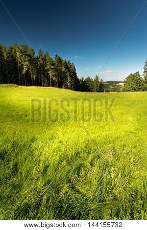 Vertical photo of fresh summer meadow with nice light in grass and with few trees around way downhill. Few houses are in background. Sky is blue and with few clouds.