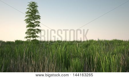 3d illustration of lonely bamboo bush in grass field