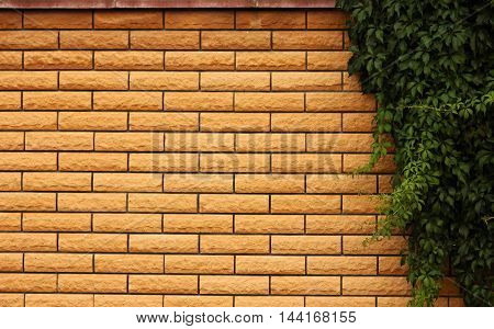 a very new of brick wall background