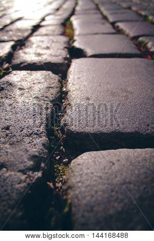 cobblestone stone pavement texture in the city