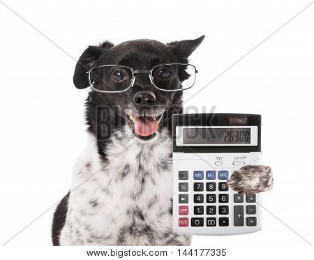 Accountant Dog With Calculator On White Background