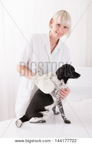Happy Young Female Veterinary Examining Dog In Clinic