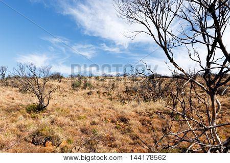 Dry Grassland - Graaff-reinet Landscape