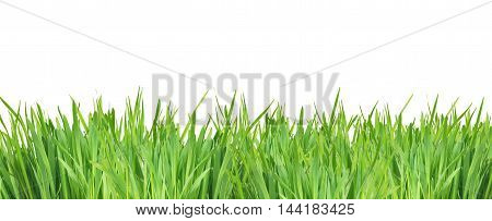 green grass isolated on white a background
