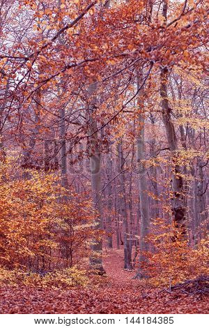 Nature outdoor scenery woodland concept. Autumnal bushes in forest. Small vegetation amidst fall foliage golden leaves.