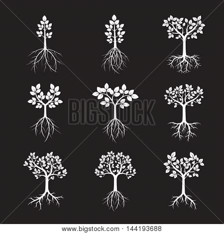 Set White Trees. Vector Illustration. Nature and Garden.