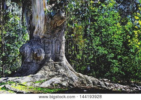 Old tree in middle of a forest