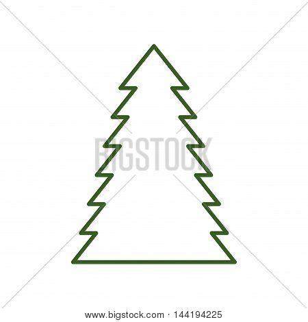 pine tall tree plant traditional christmas decorative symbol vector illustration