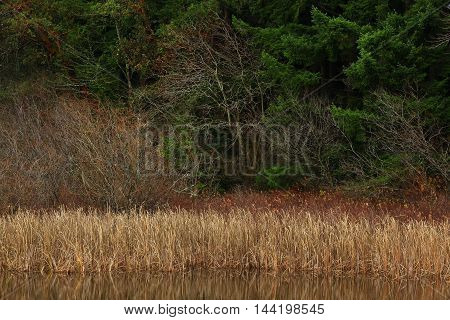 a picture of an exterior Pacific Northwest forest and shoreline of a fresh water pond