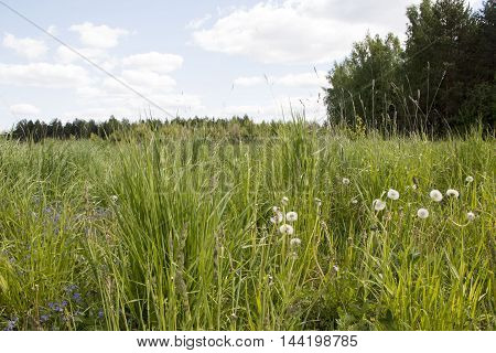 Field And Grass In Beautiful Summer Day