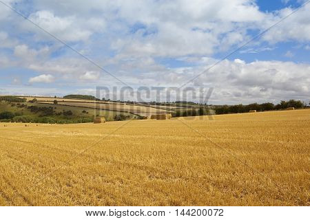 Wolds Harvest
