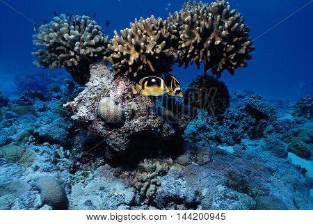 Beautiful marine life