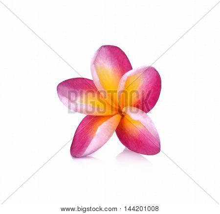 Frangipani flower isolated on white background nature