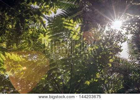 Sun shining through leaves in a rainforest