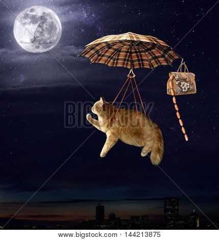 A brave cat is flying on an umbrella.