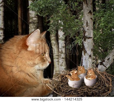 A cat looks at it's kittens in a nest. The chicks just hatched.