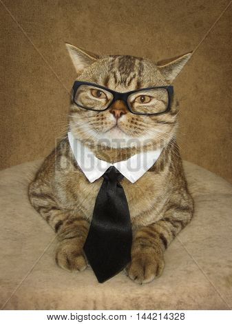 A serious handsome and big cat is sitting on a pillow. He is wearing glasses tie and collar.