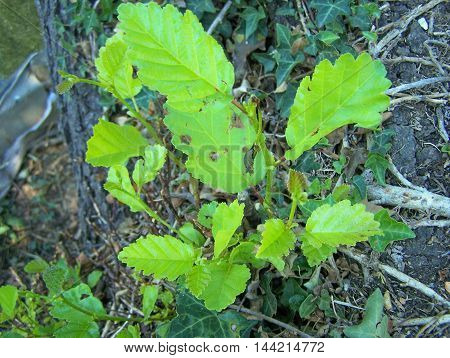 Several beautiful plant leaves in a public garden