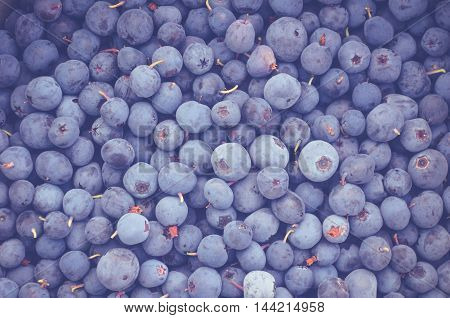 The fresh blueberry harvest from the norths mountains
