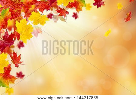 Autumn leaves on a sunny background. Abstract background.