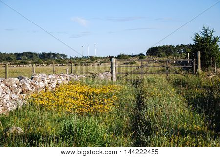 Old wooden gate in a sunlit landscape with a stone wall and yellow wildflowers