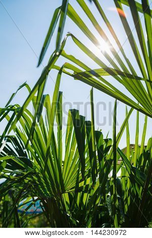 Low perspective of bright green leaves of plant in sunlight against of blue sky