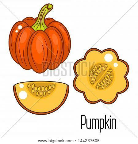 vector illustration. Orange pumpkin whole vegetable and slice.