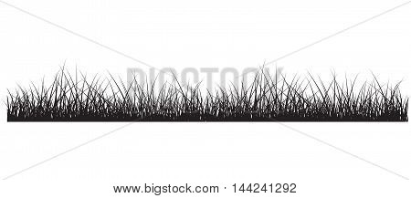 Grass black background environment lawn length foliage lush