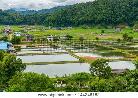 Fish farming in the Pokhara valley, Nepal