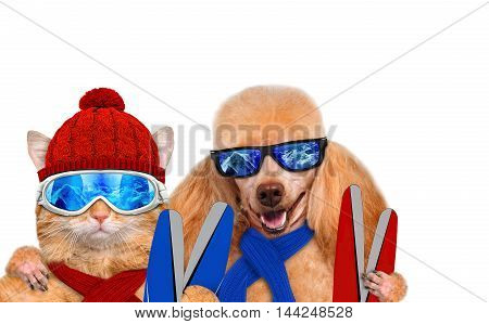 Cat and dog wearing ski goggles relaxing in the mountain. Isolated on the white .