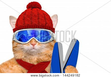 Cat wearing ski goggles relaxing in the mountain. Isolated on the white .