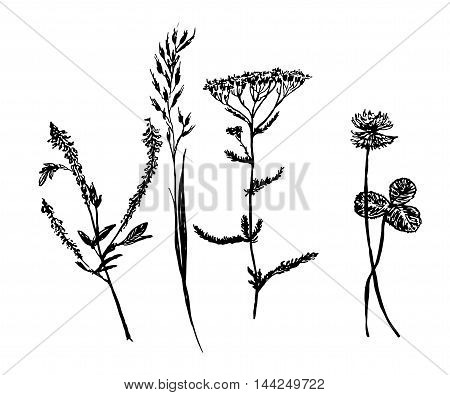 set of isolated drawings, forest and meadow grass sketch hand-drawn vector illustration