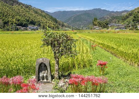 Guardian deity of rice field in autumn country of Kagoshima