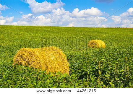 Golden straw bales on soybean field. Abstract background.